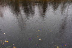 Jesieni bagna krajobraz Fotografia Stock
