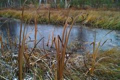 Jesieni bagna krajobraz Zdjęcia Royalty Free