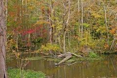 Jesieni bagno Fotografia Stock