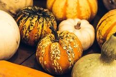 Jesieni bani dziękczynienia tło - pomarańczowe banie nad ośniedziałym tłem obrazy royalty free