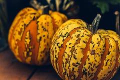 Jesieni bani dziękczynienia tło - pomarańczowe banie nad ośniedziałym tłem zdjęcie stock