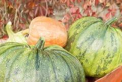 Jesieni bani żniwo Obrazy Royalty Free