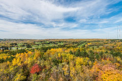 Jesieni barwiona scena Obraz Stock
