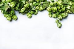 Jesieni biały tło z zielonymi chmiel rożkami na winogradzie, wierzchołek vi obraz stock