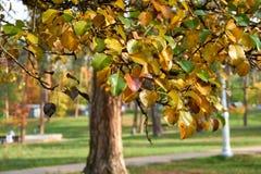 Jesieni bonkrety liście zdjęcie stock