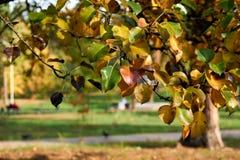 Jesieni bonkrety liście zdjęcia stock