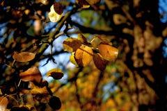 Jesieni bonkrety liście obrazy stock
