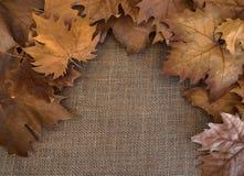 Jesieni brązu susi liście na worek powierzchni fotografia royalty free
