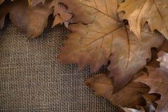 Jesieni brązu susi liście na worek powierzchni fotografia stock