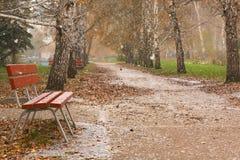 Jesieni brzozy aleja pierwszy śnieg Obraz Royalty Free