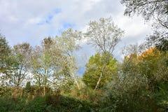 Jesieni brzozy drzewa na słonecznym dniu, krzakach i ciężkich chmurach, Zdjęcia Stock
