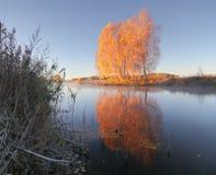 Jesieni brzozy drzewa odbijają w jeziorze Zdjęcia Royalty Free