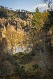Jesieni brzozy drzewa przy Loch Pityoulish w średniogórzach Szkocja Obrazy Stock