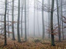 jesienią cichy drewna Zdjęcie Stock