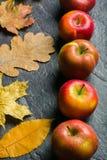 Jesieni ciemny tło lub rama spadać kolorów żółtych liście i dojrzali czerwoni jabłka Rama dla teksta lub fotografii Obowiązujący  Fotografia Stock