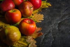 Jesieni ciemny tło lub rama spadać kolorów żółtych liście i dojrzali czerwoni jabłka Rama dla teksta lub fotografii Obowiązujący  Obraz Royalty Free
