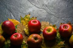 Jesieni ciemny tło lub rama spadać kolorów żółtych liście i dojrzali czerwoni jabłka Rama dla teksta lub fotografii Obowiązujący  Obraz Stock
