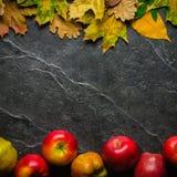Jesieni ciemny tło lub rama spadać kolorów żółtych liście i dojrzali czerwoni jabłka Rama dla teksta lub fotografii Obowiązujący  Zdjęcie Stock