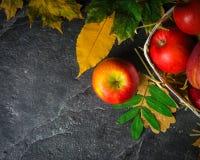 Jesieni ciemny tło lub rama spadać kolorów żółtych liście i dojrzali czerwoni jabłka Rama dla teksta lub fotografii Obowiązujący  Zdjęcia Stock
