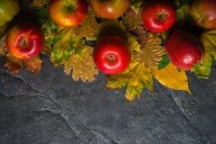 Jesieni ciemny tło lub rama spadać kolorów żółtych liście i dojrzali czerwoni jabłka Rama dla teksta lub fotografii Obowiązujący  Fotografia Royalty Free