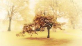 Jesieni cisza Obraz Stock