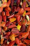 jesienią colorfull Zdjęcia Stock