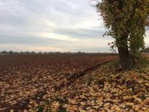 Jesieni Colour Zdjęcia Royalty Free