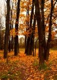 Jesieni colours Zdjęcie Royalty Free