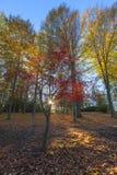 Jesieni colours przy wschodem słońca Fotografia Royalty Free