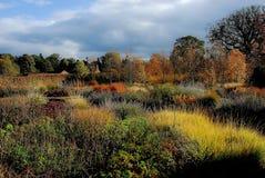 Jesieni colours w formalnym ogródzie Zdjęcie Royalty Free