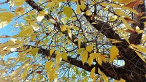 Jesieni colours w Południowa Afryka Obraz Stock