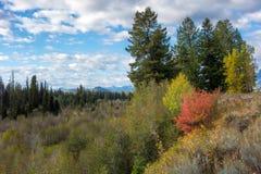 Jesieni Colours w Wyoming Zdjęcie Royalty Free