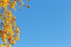 Jesieni copyspace Niebieskiego nieba i klonu gałąź zdjęcia stock