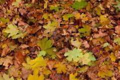 jesieni czerwieni i koloru żółtego liście przeciw niebieskiemu niebu Zdjęcia Royalty Free