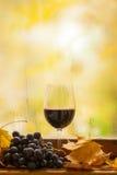 Jesieni czerwone wino Zdjęcie Stock