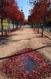 Jesieni defoliation Zdjęcia Stock