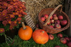 Jesieni dekoraci, czerwieni i zieleni jabłka w łozinowym koszu na słomie, banie, kabaczek, wrzos kwitną i chryzantema kwitnie Fotografia Stock