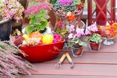 Jesieni dekoracja obrazy royalty free