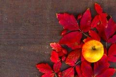 Jesieni dekoracja na drewnianym tle Fotografia Royalty Free