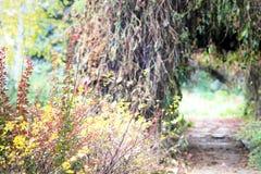 Jesieni dolina Zdjęcie Stock