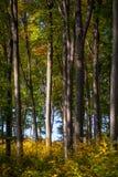 Jesieni drewna Obrazy Royalty Free