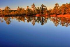 jesienią drewna Fotografia Stock