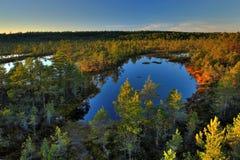 jesienią drewna Zdjęcia Stock