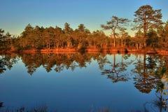 jesienią drewna Obraz Royalty Free