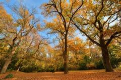 Jesieni drewna Obraz Royalty Free