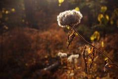 Jesieni drewna Zdjęcia Stock