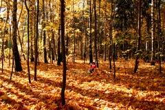jesienią drewna Obrazy Royalty Free