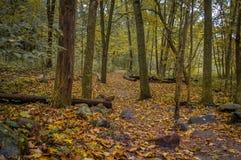 Jesieni drewna Zdjęcie Royalty Free