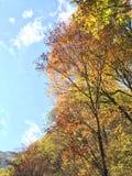 Jesieni drewna Fotografia Royalty Free