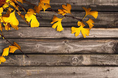 Jesieni drewniany tło Fotografia Royalty Free